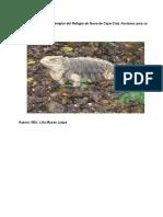 Iguana Cubana Ejemplar Del Refugio Fauna Cayo Cruz Acciones Su Resguardo