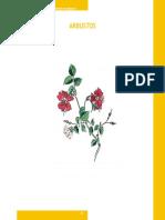Arbusto s