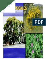 Clase 8 Rosales