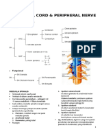 Anatomi Spinal Cord & Peripheral Nerve