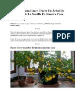 Aprende Como Hacer Crecer Un Árbol De Limón Desde La Semilla En Nuestra Casa.docx