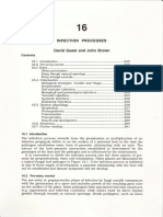 16 Infection processes (DIG&JFB)-1.pdf