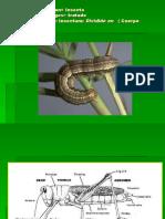 Morfologia de Insectos
