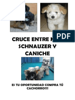 perro.docx