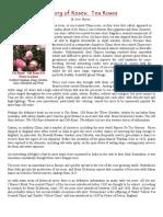 History of Roses Tea Roses