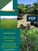 Fertilidad-de-suelos.pdf