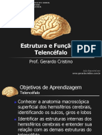 Telencefalo