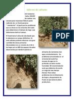 Informe de Calicata Hector Casas