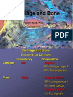 Cartilidge Bone