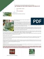 herbal sirih merah SMS/CALL 085643086831 | agen Sirih Merah | alamat penjual Sirih Merah | aturan minum Sirih Merah | cara menjadi agen Sirih Merah