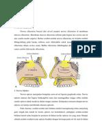 Anatomi Saraf Kranialis