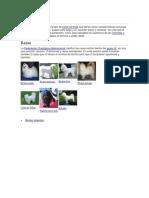 Perros de Compañia II