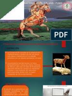 Anatomia Topografica
