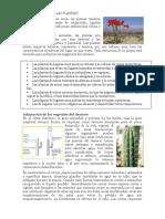 Adaptaciones Climáticas de Las Plantas