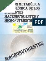 Función Metabólica de Los Fisiológica de Los Macronutrientes y Micronutrientes