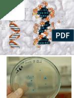 Genetica Molecular y Microbiana 2012 II