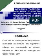 Slide Projeto Aves