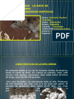 Proteccion Vegetal Rata de Campo