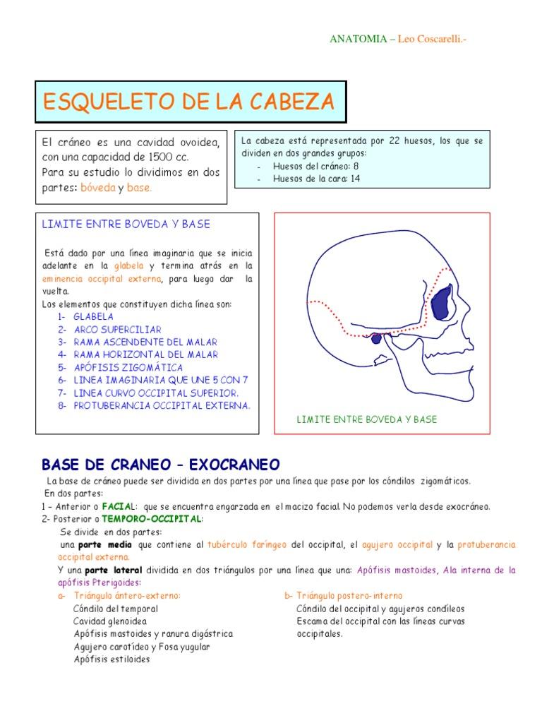 ESQUELETO DE LA CABEZA.pdf
