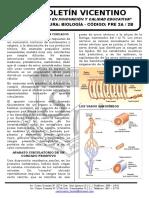 Boletín Biología 29 Pre 2a-2b Aparato Circulatorio en Cordados