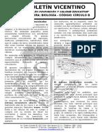 Boletín Biología 28 Circulo b Circulación Invertebrados