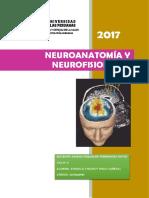 Neuroanatomia y Neurofisiologiavisto