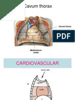 cavum thorax