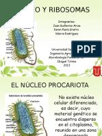 nucleo ribosomas