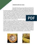 Fermentación Del Cacao