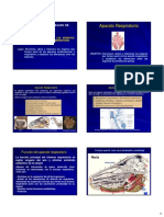 3 Ppt Anatomia Respiratoria 2017 II