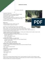 Ecosistem - Padurea de Conifere