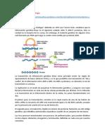Dogma Central de la Biología exposicion.docx