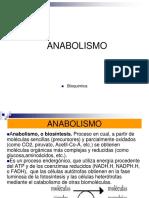 13.- ANABOLISMO
