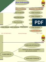 principales-grupos-de-insectos1.pdf