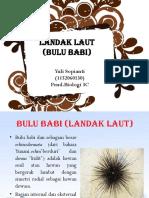 ppt landak laut  bulu babi
