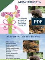 ppt monotremata