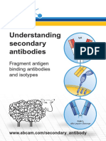 Understanding Secondary Antibodies