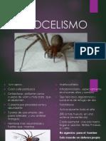 loxocelismo-1