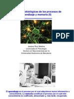 basesneuralesdelaprendizajeylamemoriaii-140322131134-phpapp01
