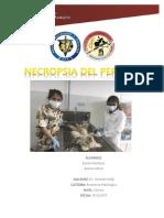 Necropsia Perro Doc