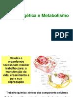 Bioenergética e Metabolismo 2007