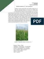 Al Asmaul Husna_D24150078_[Phalaris arundinacea L.  (reed canarygrass).docx