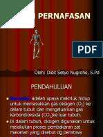 39948224-SISTEM-PERNAFASAN.ppt