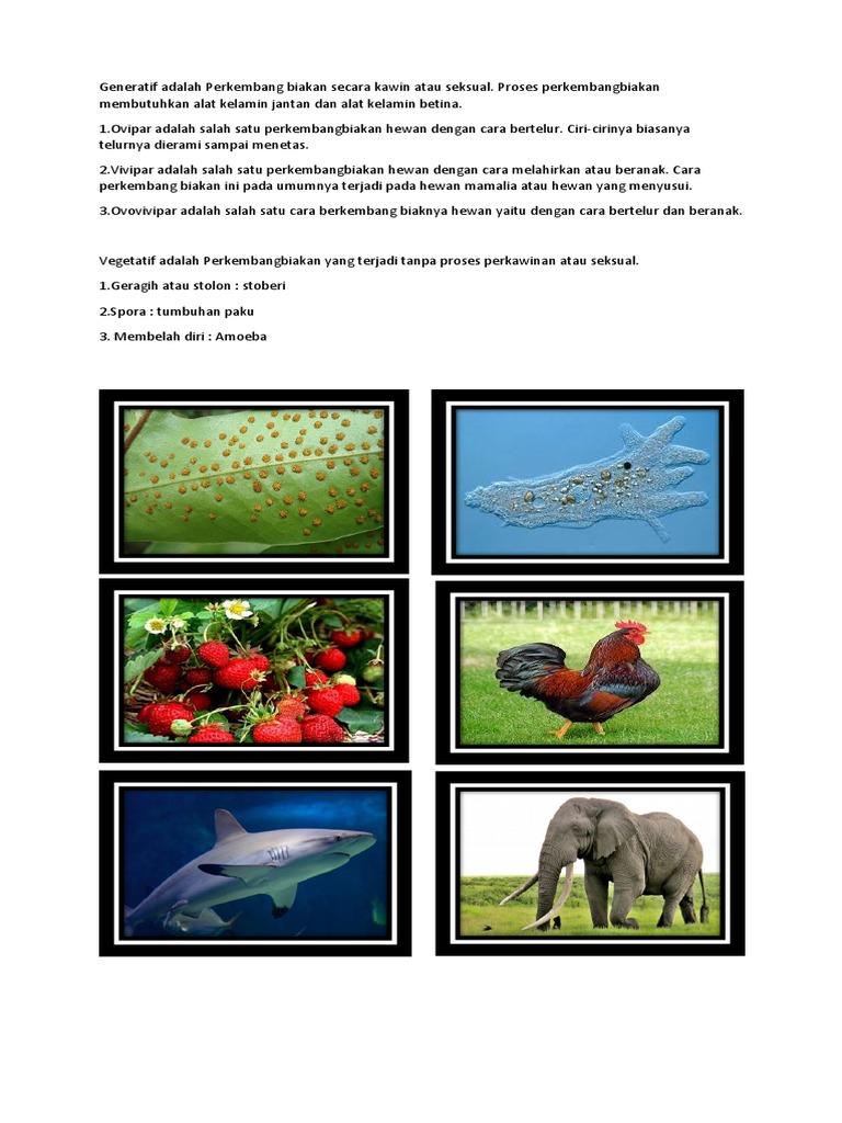 1020+ Gambar Perkembangbiakan Hewan Secara Generatif Gratis Terbaru