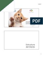 Odontologia Felinos  2017
