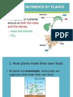 Modern Bio II - Nutrition Plant and Animals