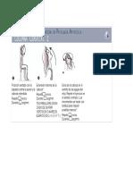 Manual Ejercicios Posturales