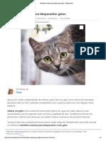 Remédios caseiros para desparasitar gatos - PeritoAnimal