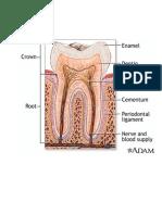 gambar gigi.pdf