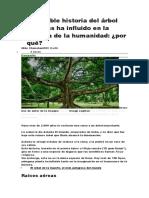 La Increíble Historia Del Árbol Que Más Ha Influido en La Historia de La Humanidad